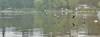19880293750_6335b0c226_t