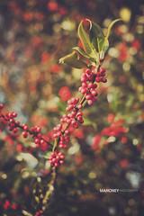 Winter Colors photo by Mahoney Photography WA