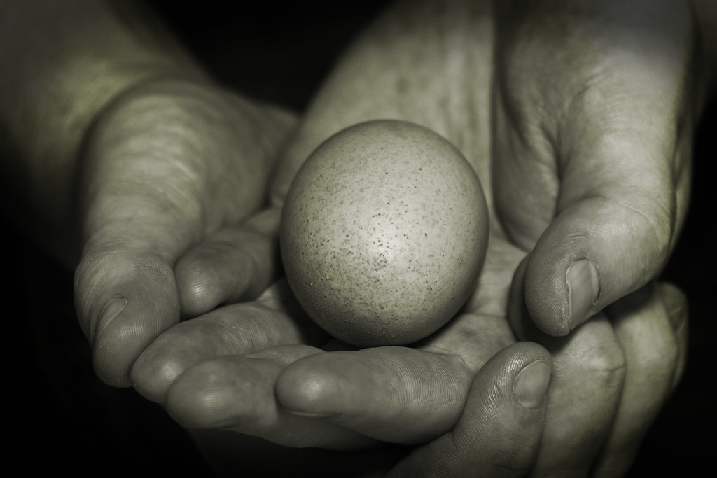 One egg is un oeuf photo by Gemma Stiles