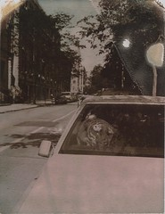 Tiger in a Cadillac photo by anniebee