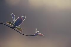 Frozen beauty photo by Mathijs Delva