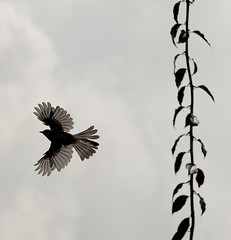 天空下/may be a magpie photo by Zhou Mingjia