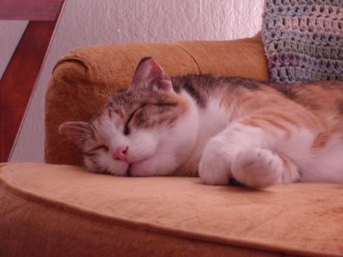 Sleeping Lucy