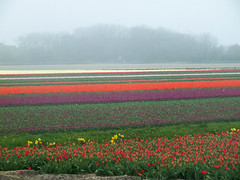 a sea of colours [explored] photo by carol_malky