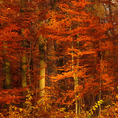 Autumn Light in the Forest photo by Batikart