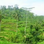 Bali (Indonésie)