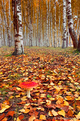 Autumn Forest photo by -yury-