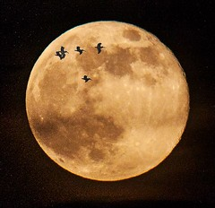 Pelicans interrupting a Southport, NC,  super moon! [Explored - thank you!] photo by Jessica's Rider