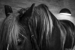 Brewer's horses - Rest photo by EliseGrandjean