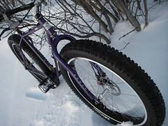 bike_pugs_front