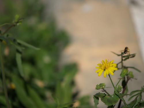 P3251987-flickr