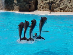 Dolphin Show #2