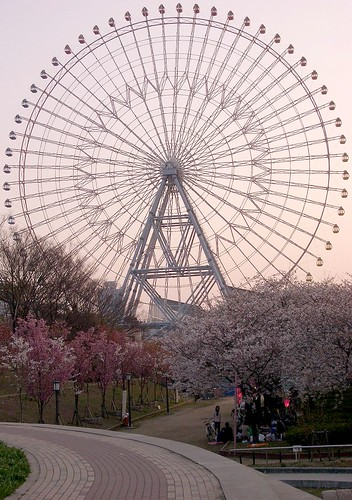A Ferris wheel, cherry blossoms& Hanami 観覧車とお花見