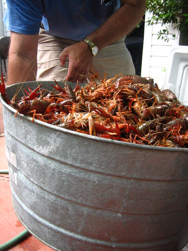 Live crawfish contemplating their doom