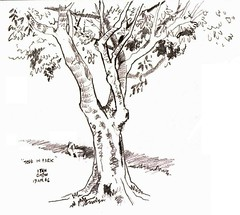 Tree in Park (19 Apr 2006)