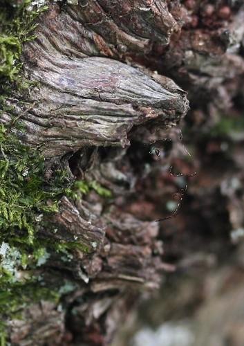 Wood Sprite