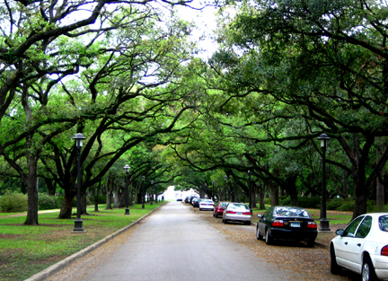 Live Oak Boulevard_Houston
