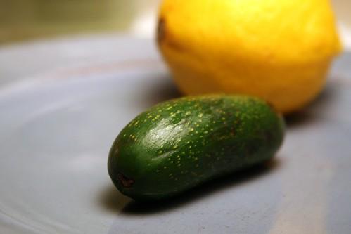 Cocktail Avocado