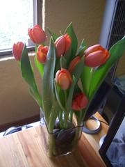 tulip 4/5