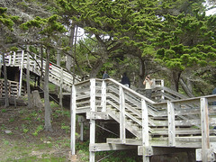 Lone Cypress - Stairs