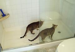 shower visit