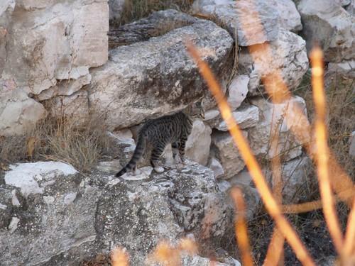 cat 2/248