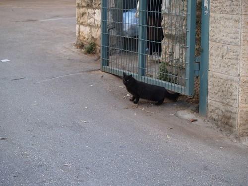 cat 41/248
