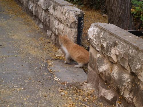 cat 38/248
