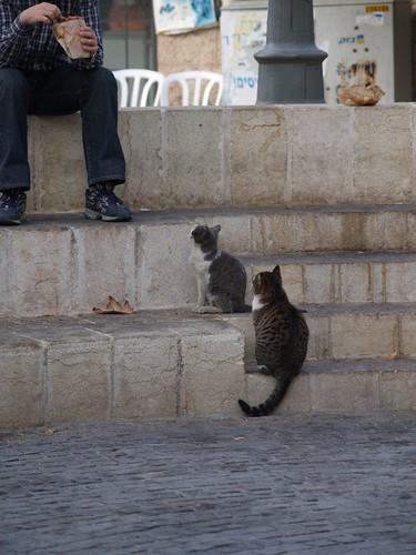 cat 74/248
