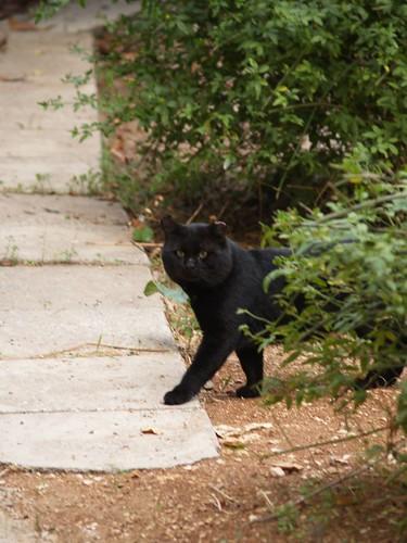 cat 155/248