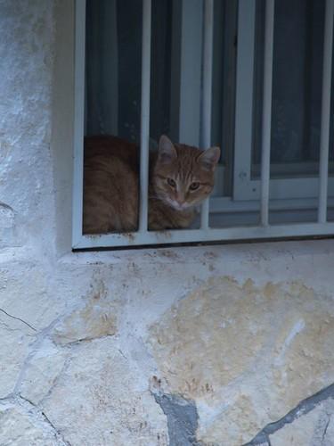 cat 154/248