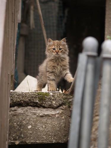cat 194/248