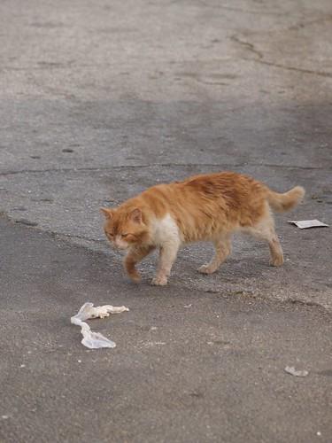 cat 209/248