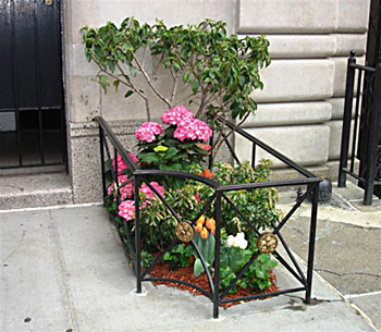 Small garden growing amongst the concrete pavements of New York