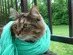 Fee Models the Blue Yarn