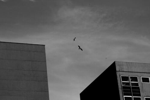 minimal seagul