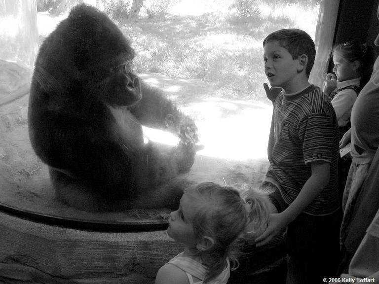 IMG_2871 - Children Marveling at Gorilla