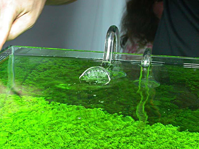 Трубки забора и возврата воды в аквариум
