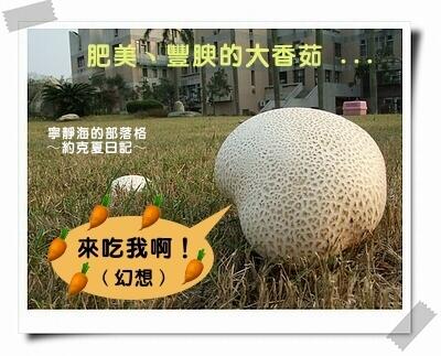 約克夏日記_07_超級大香菇