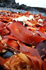 mmmm red kelp