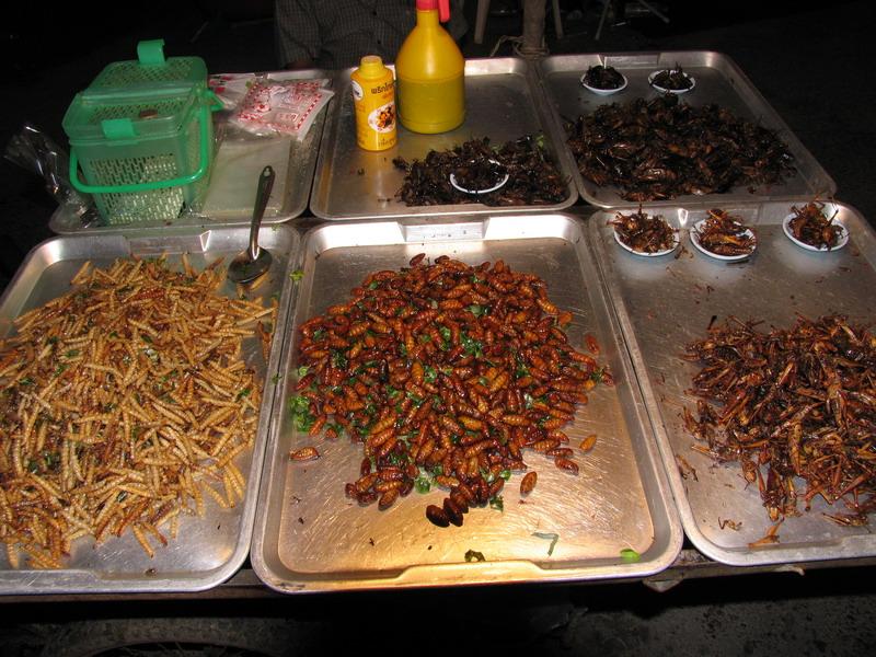 Control de plagas y epidemias taringa - Eliminar hormigas cocina ...