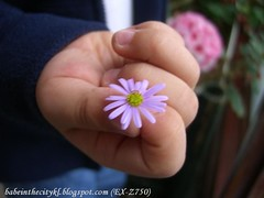 ch - heritage daisy