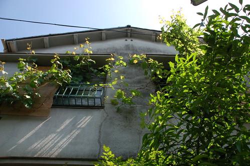 VINE HOUSE