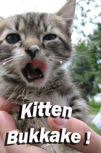 Bukkake Kitten!