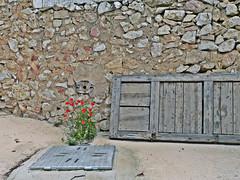 Porta amb flors / Door wih flowers