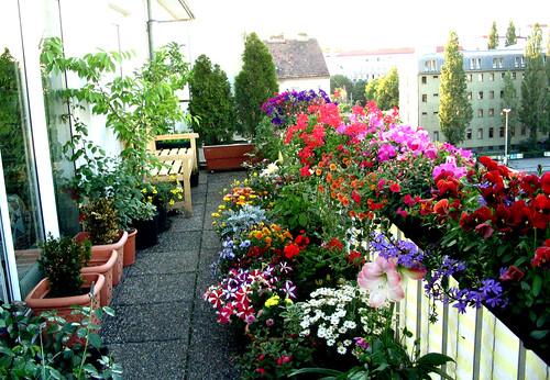 em apartamento mas quer ter um lindo jardim pode separar um cantinho