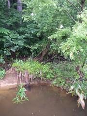 とある、池。