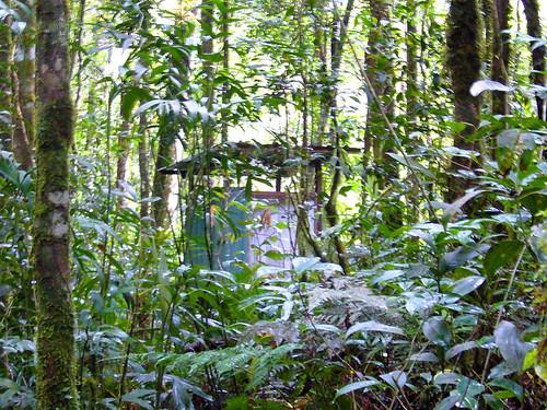 jamban dalam hutan