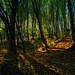 Morning light in forest