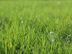 Bubble grass photo by eugene.photography